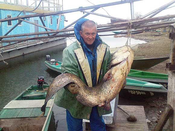 каралат рыболовная