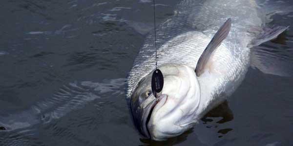 Рыбалка на дельте Волги - ОСЕНЬЮ, в какую погоду ловиться Замечено, что при падении